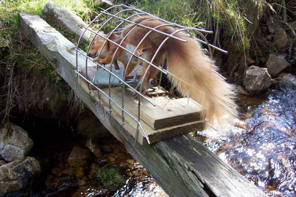 Views On Conservation Issues For Squirrels